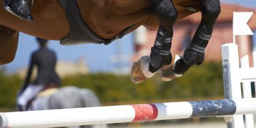 Italy fines equestrian regulator for breaking commitments