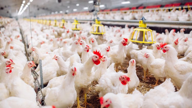 Hungary probes poultry production merger over misleading information
