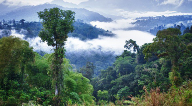 Ecuador to challenge Chevron denial of justice award