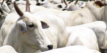 Brazilian beef company faces corruption claim