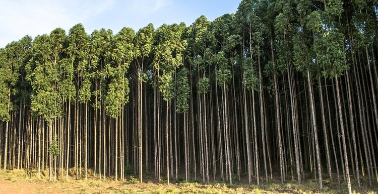 Ferrere structures largest forestry fund in Uruguay