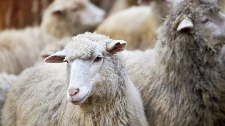 Wool deal probed in New Zealand