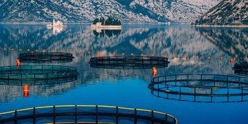 Agrosuper buys salmon farmer AquaChile