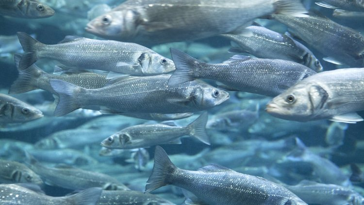 EU conditionally waves through fisheries deal