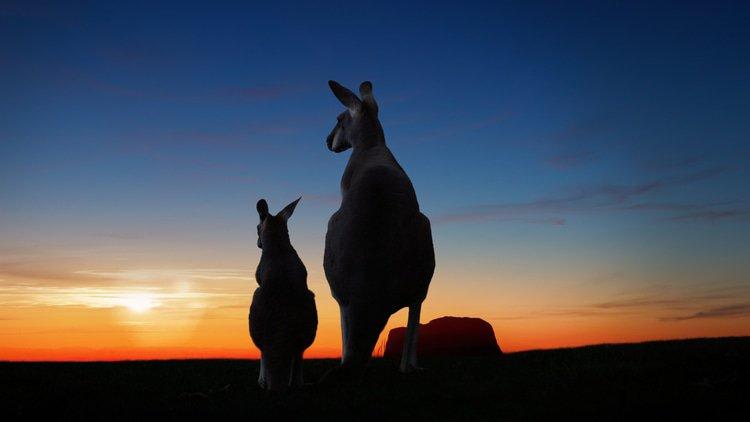 Australia's ARITA under new leadership