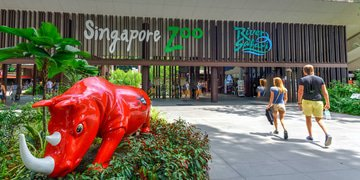 Singapore finds contractors rigged bids for zoo work