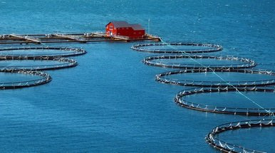Chile's biggest salmon fishery gets Bank of China credit line