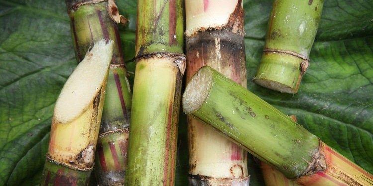 Bunge and BP enter ethanol JV in Brazil