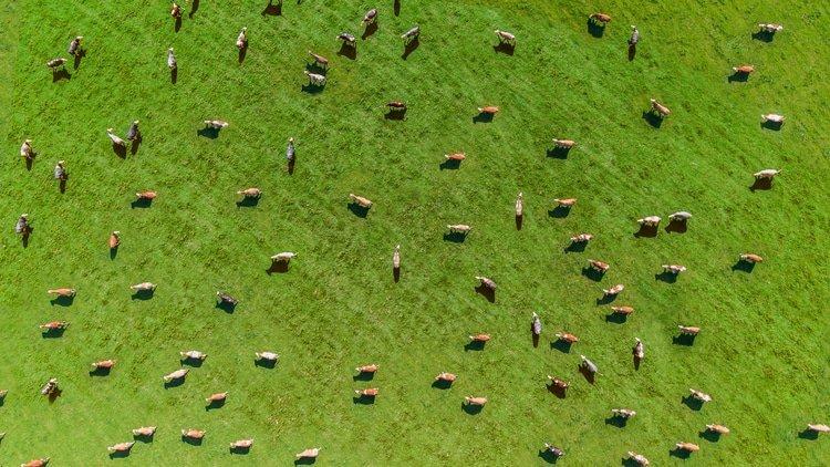 Venezuela fails to annul cattle farm arbitration award